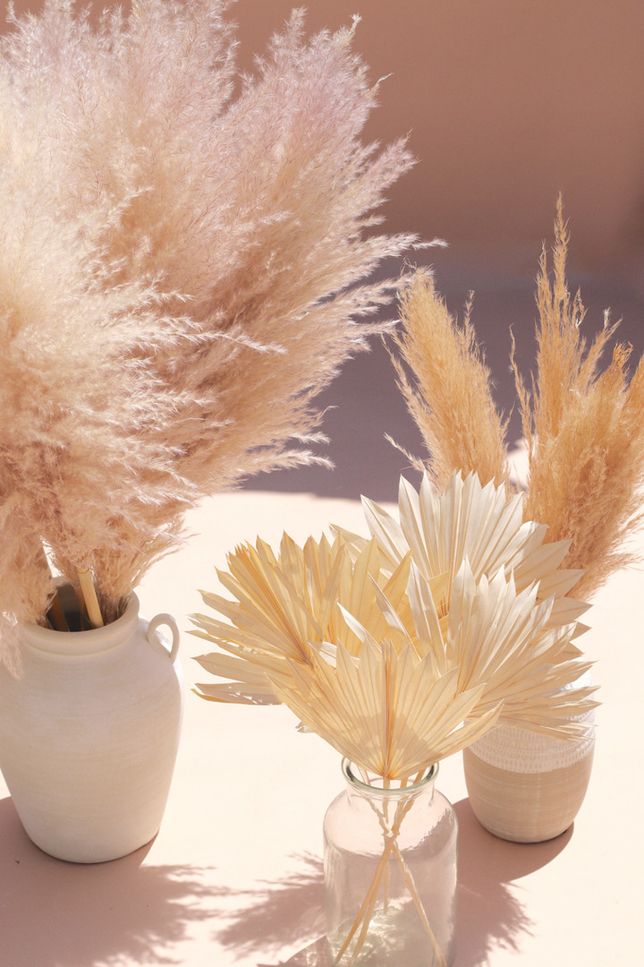 From L to R: dreams pampas, bleach white sun palms, small pampas