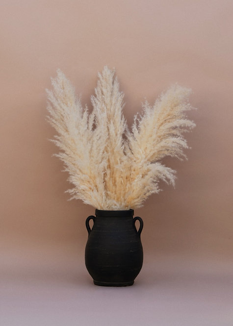 3 ft. Tall Pampas Grass - Bundle of 3 -Halo