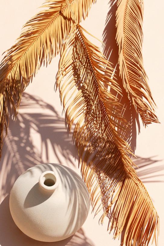 preserved natural sago palms