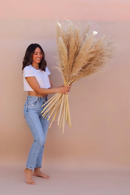 Medium Pampas Grass - Bundle of 3 Tan Shade