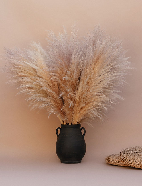 3-3.5 ft. Tall Pampas Grass - Bundle of 3 Light Brown/Purple Hue - Dreams