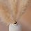 Thumbnail: Small Pampas Grass - Bundle of 3 - Halo
