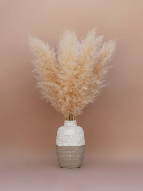 Small Pampas Grass - Bundle of 3 - Halo