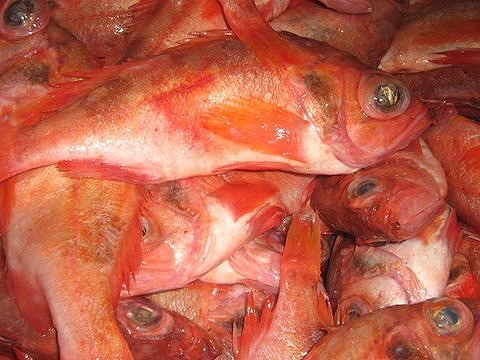 Red fish Whole round