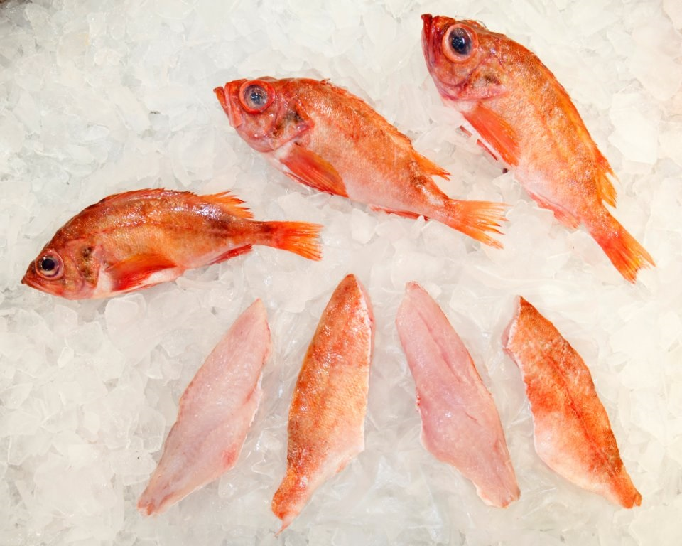 redfish wr 3