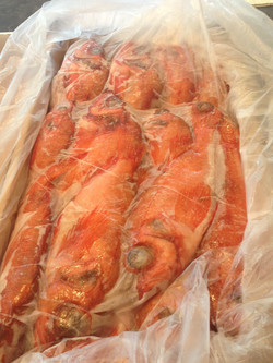 redfish wr