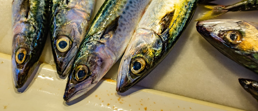 Chub mackerel sitting on a table