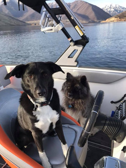 Dogs are welcome on our boat rentals
