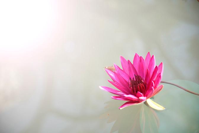 Buddha's Lotus