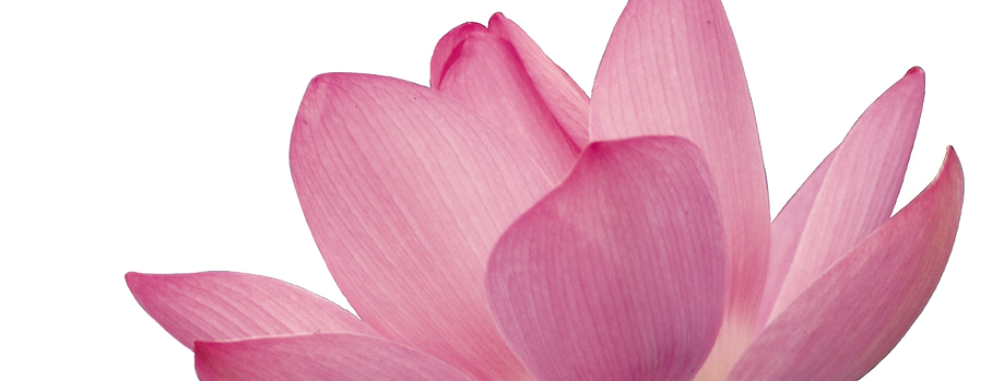 Pink%20Flower%20Petals_edited.png