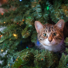 How to Pet-Proof Your Christmas Tree