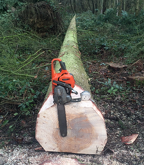 Chainsaw Tree Felling