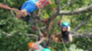 Tony Darbyshire Tree Climbing Training