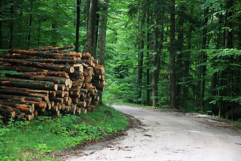 Log Stack from tree felling