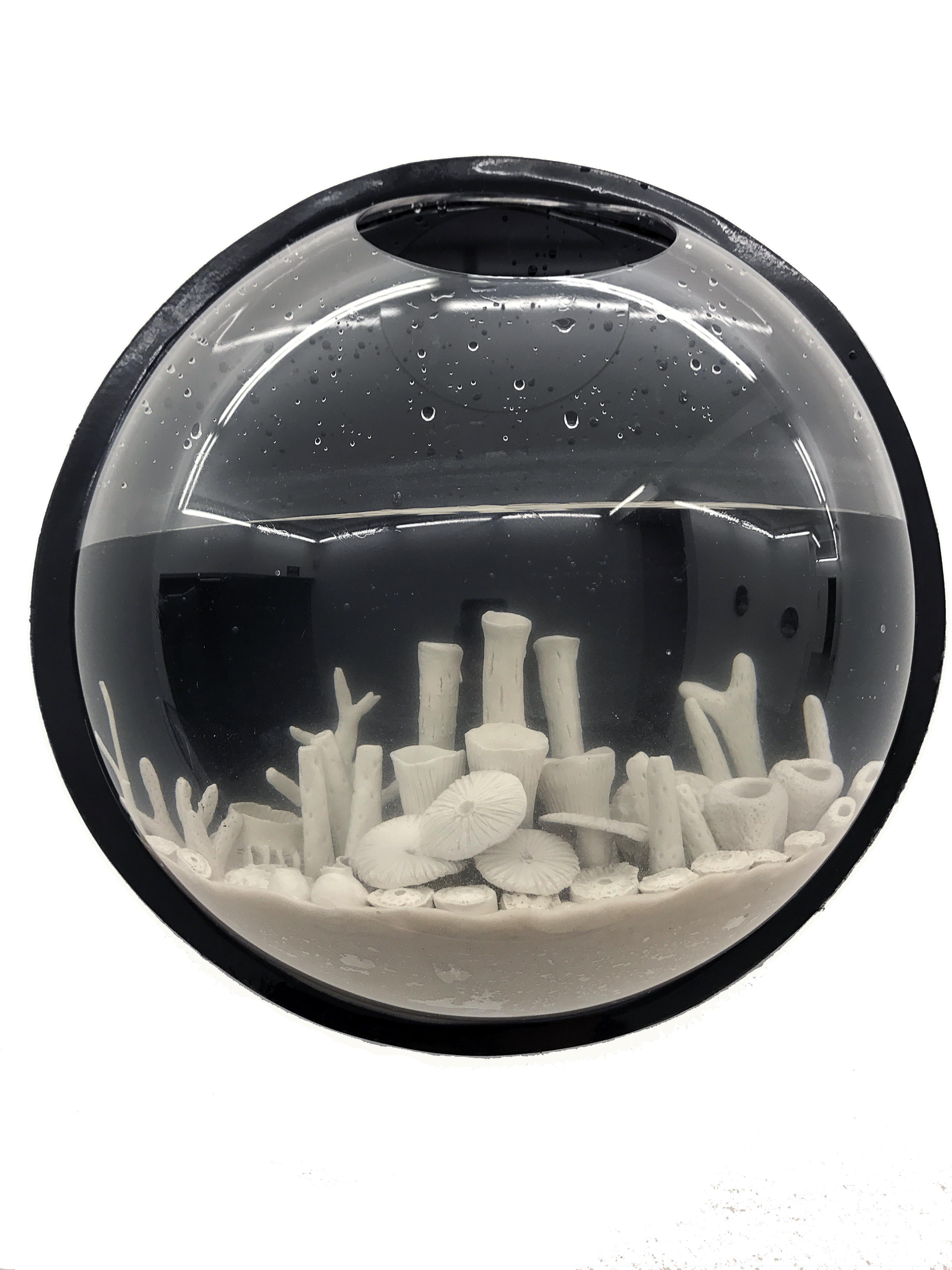 aquario 1