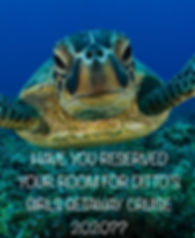 Have you turtle.JPG