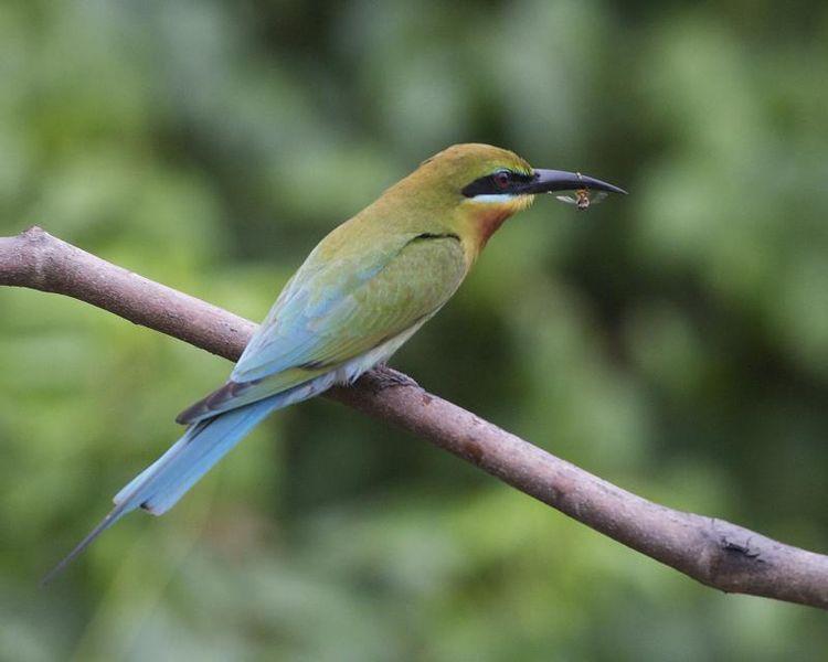 Koggala bird life