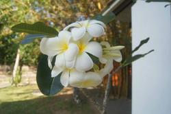 Flowers at Mandalay