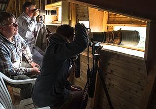 affût en hauteur pour photographier la nidification des cigognes blanches en stage affût en Vendée
