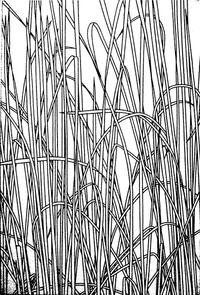 Ann Stoddard acrylic Cattails.jpg