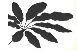 Shefflera serigraph.jpg