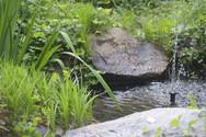 Water Garden.jpg