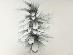 5_Ann Stoddard Drawing I Pinecone pineco