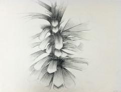 5_Ann Stoddard Drawing I Pinecone pineco