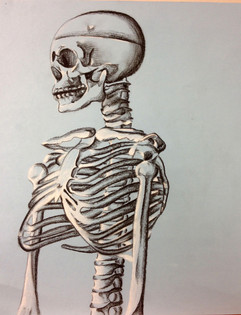 11_Ann Stoddard Drawing I Conte Skeleton