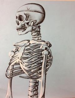 11_Ann Stoddard Drawing I Conte Skeleton