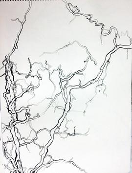 1_Ann Stoddard Drawing I LINE INK Branch