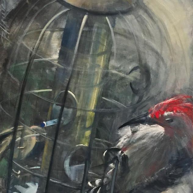 Study of a Woodpecker