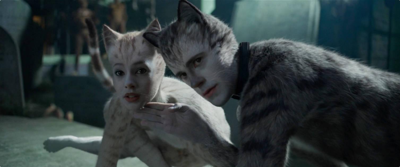 17 Cats.jpeg