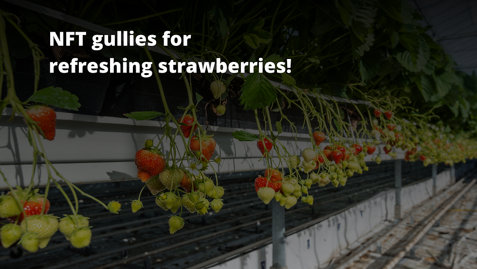 Agri Joy strawberries.png