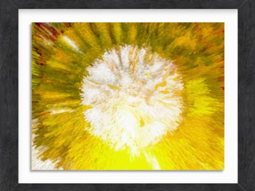 Lemon Flower (c) 2020