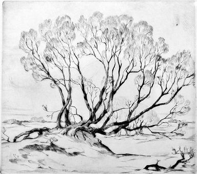 Tangled-Willows dry point.jpg