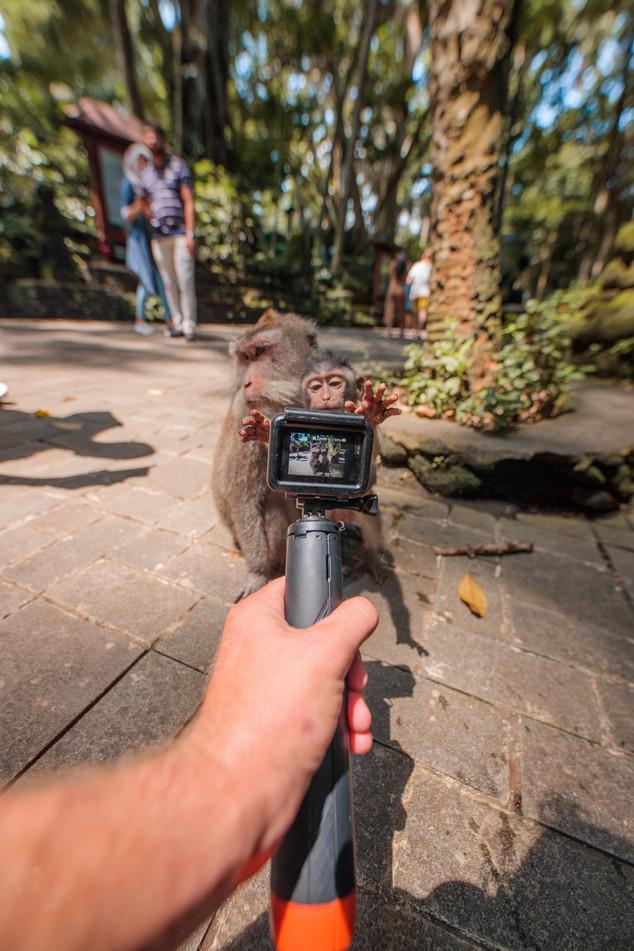 Nu Grip - Grab it quick the monkeys love a photo.