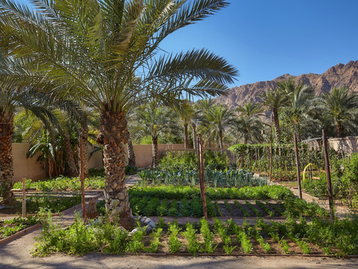 Six Senses Zighy Bay Creates Carbon Neutral Rate for Environmentally Conscious Travelers