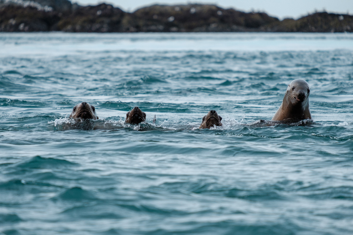 There's always one sea lion.