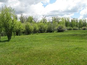 261_NE_Meadow-1024x768.jpg