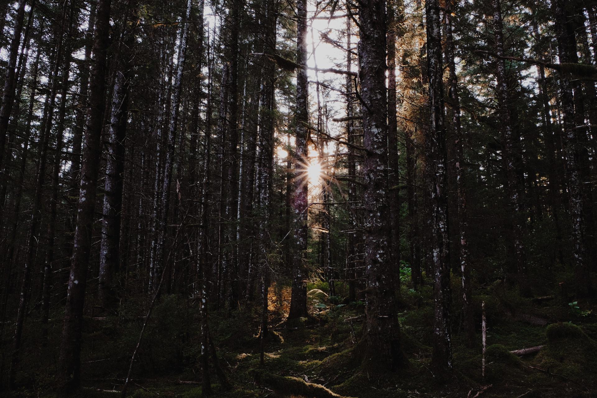 Favorite forest.