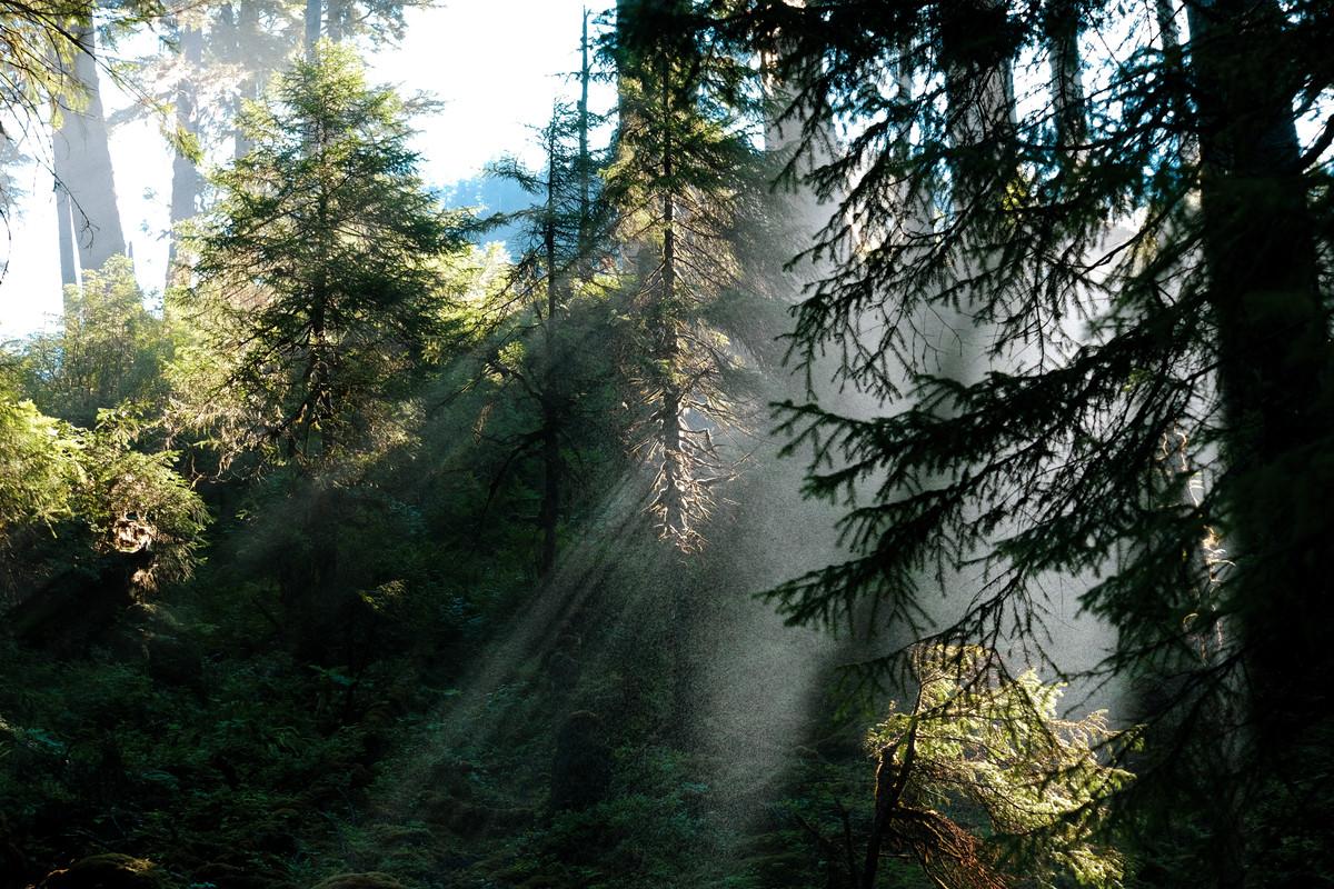 Cascade Creek, Waterfall Mist.