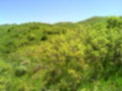 DSC00458_N_ViewAtTop2.jpg