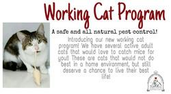 Working cat program