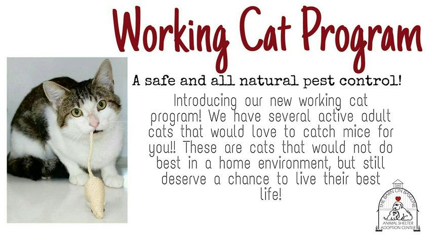 Working cat program.jpg