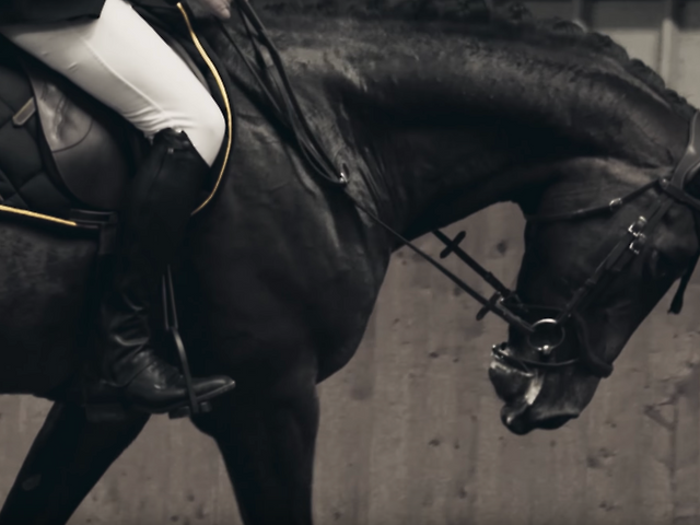 THE BARBERSHOP GROUP: SHOW JUMPER COLLABORATION