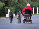 dog-walking-4426782_640.jpg