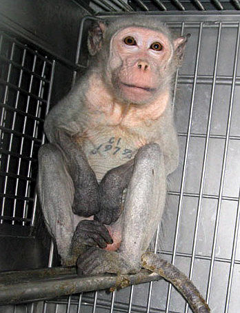Animal testing, against animal testing, cosmetic testing on animals, animal experimentation, animal research