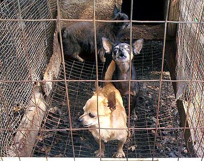 Animals as pets, animal shelters, spay and neuter, puppy mills, pet overpopulation, pet euthanasia
