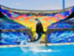 marine mammals in captivity, seaworld sucks, empty the tanks, orcas in captivity, taiji dolphin slaughter, blackfish